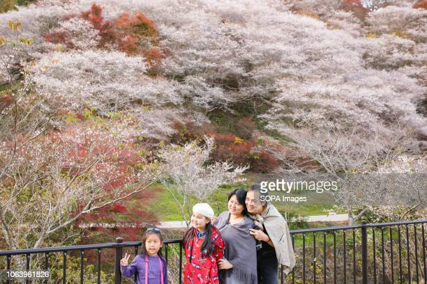 People seen taking pictures next to trees with autumn leaves Toyota Aichi has some of the famous sightseeing spots of autumn leaves during fall season