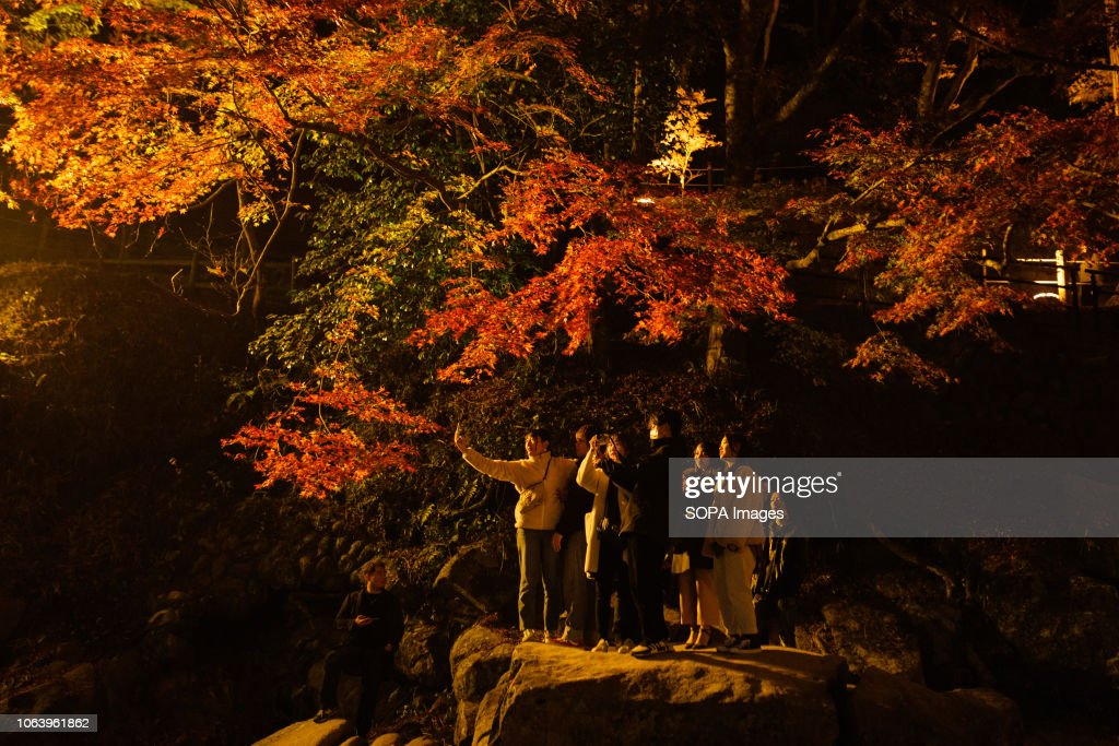 People seen taking pictures next to trees with autumn leaves... : News Photo