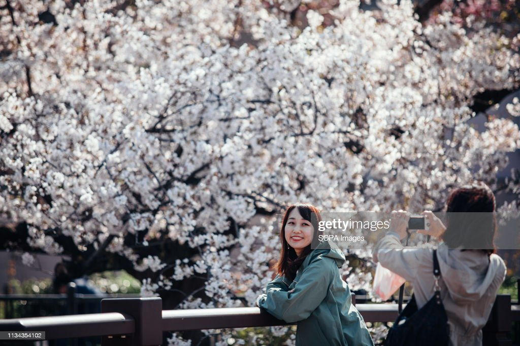 People seen talking photos next to cherry blossoms at... : News Photo