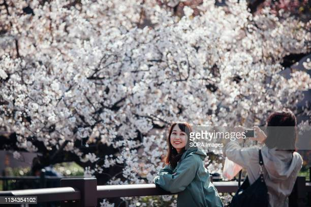 People seen talking photos next to cherry blossoms at yamazaki river nagoya Aichi prefecture Japan The Cherry blossom also known as Sakura in Japan...