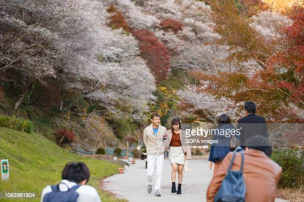People seen walking through trees with autumn leaves Toyota Aichi has some of the famous sightseeing spots of autumn leaves during fall season