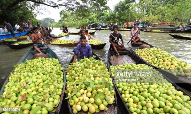 People sell guava at the local market of Barishal District of Bangladesh They are overcoming unemployment by plant harvest guava on selfemployed