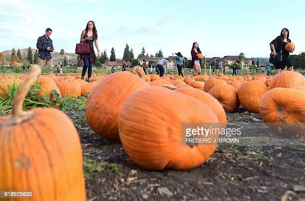 21 Cal Poly Pomona Pumpkin Festival Pictures, Photos