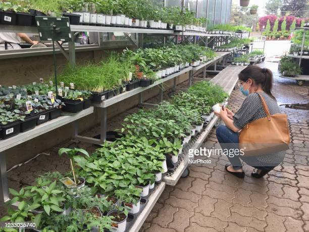 People shopping for flowers and plants at a greenhouse a few days before the Victoria Day long weekend in Toronto, Ontario, Canada on May 20, 2021.