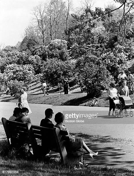 People sit beneath the blooming lilacs in their prime on Lilac Sunday at the Arnold Arboretum in Boston on May 17 1964