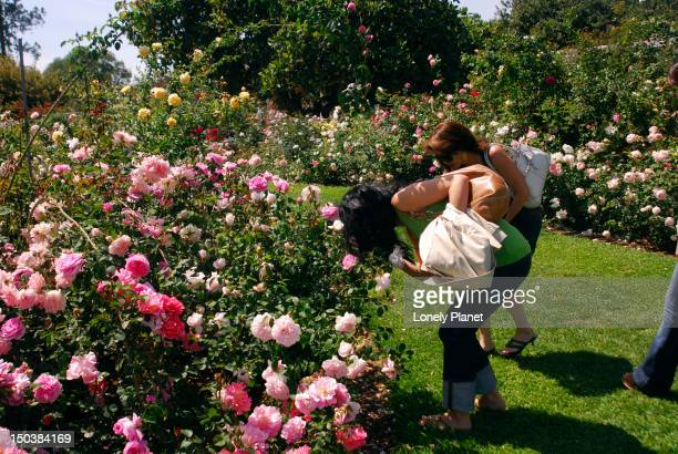 People smelling roses in Rose Garden, Huntington Museum and Gardens, Pasadena.