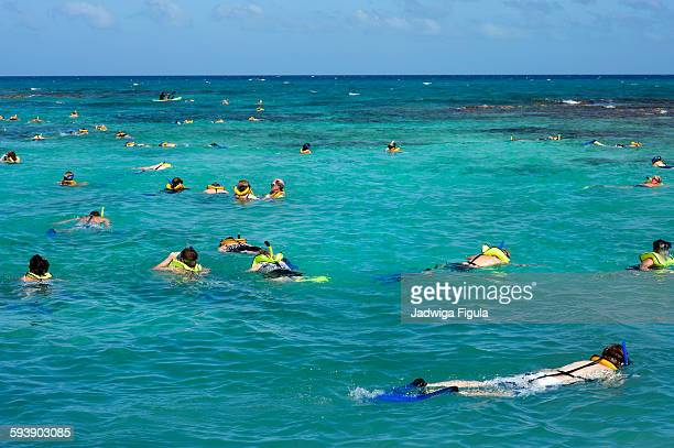 People snorkel in clear blue ocean.