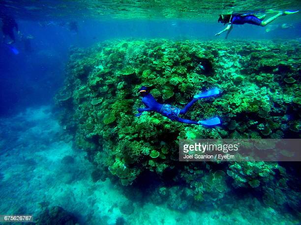 people snorkeling in sea at great barrier reef - great barrier reef stock pictures, royalty-free photos & images