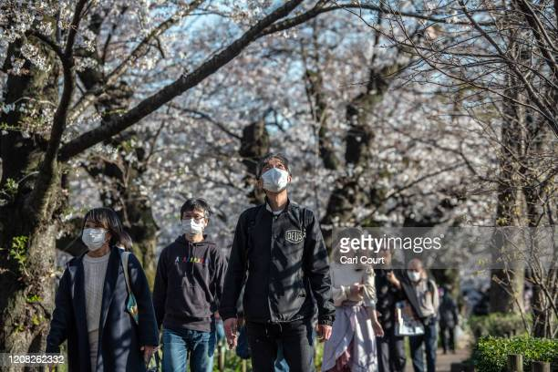 People some wearing face masks walk through a park as they enjoy cherry blossom season on March 26 2020 in Tokyo Japan Tokyo Governor Yuriko Koike...