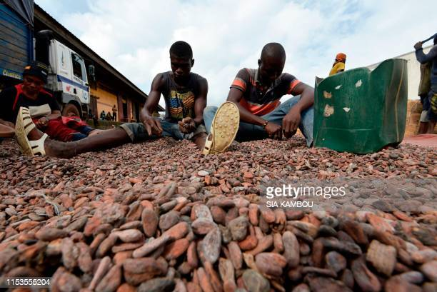 People sort cocoa beans at a cocoa exporter's in Abidjan, on July 3, 2019. - In June key producers Ivory Coast and Ghana threatened to stop selling...