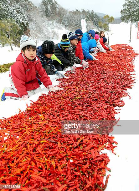People spread red chili on the snow on January 29 2015 in Kagamino Okayama Japan By placing on the snow for a couple of days soften outer skins This...