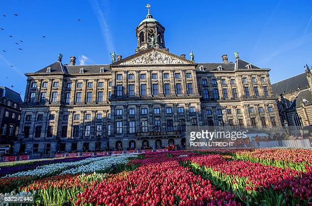 People stand near tulips set up on the Dam Square in Amsterdam The Netherlands on January 21 on the National Tulip Day the official opening of the...
