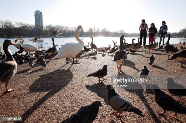People stand on the edge of a crowd of pigeons, swans and geese beside the Serpentine lake in Hyde Park in late afternoon sunlight in London,...