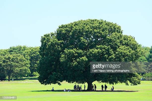 People standing under big tree