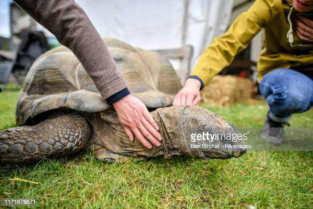People stroke an Aldabra giant tortoise at the Malvern Autumn Show, at the Three Counties Showground near Malvern in Worcestshire.