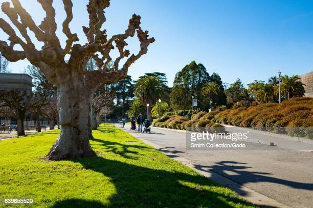 People stroll past the DeYoung Museum in Golden Gate Park with pollarded London plane and Scotch elm trees visible San Francisco California January...