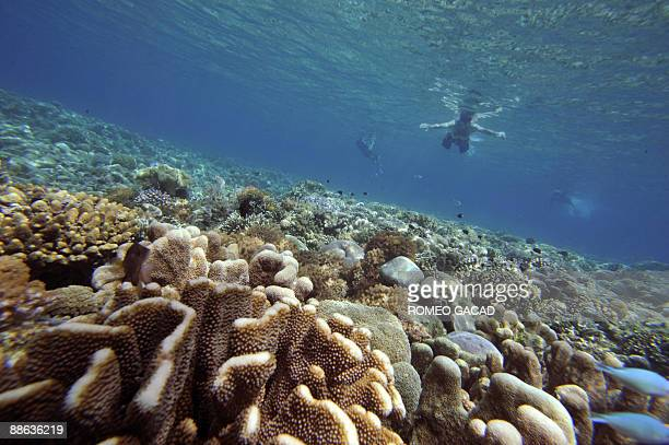 People swimp past corals at the protected Bunaken Island marine national partk in Manado on May 14 2006 Rising water temperatures sea levels and...