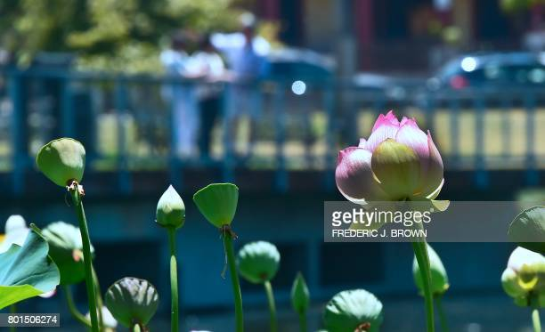 People take in the view from a bridge as Lotus flowers near full bloom at Echo Park lake amid an ongoing southern California heatwave in Los Angeles...