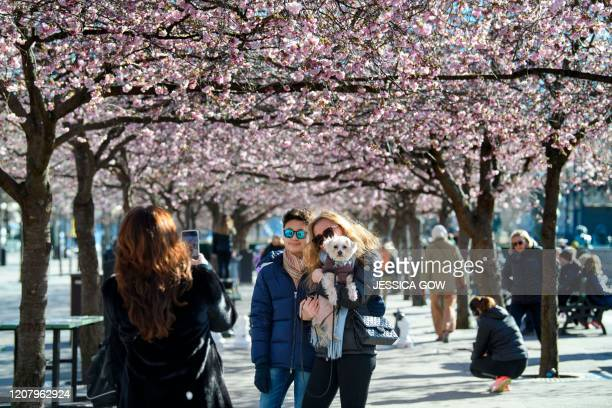 People take photos among blooming cherry trees in Kungstradgarden park in Stockholm, Sweden, on March 22, 2020. - Many people enjoyed the sunny but...