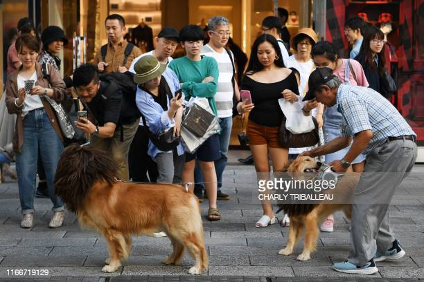 People take photos of a man walking his dogs seen wearing manes to resemble lions in Tokyo's Ginza district on September 8 2019
