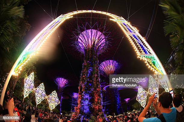People take photos of the Italian luminaries light sculptures installation at the Supertree Groves at the Gardens By The Bay on December 19 2014 in...