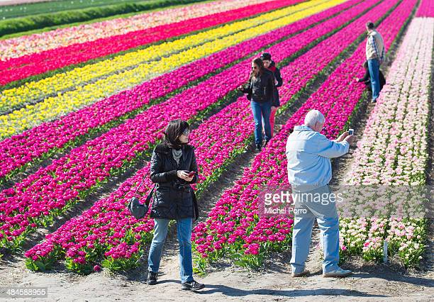 People take pictures in the flower fields on April 13 2014 in Noordwijkerhout Netherlands The fields are in bloom early this year due to the very...