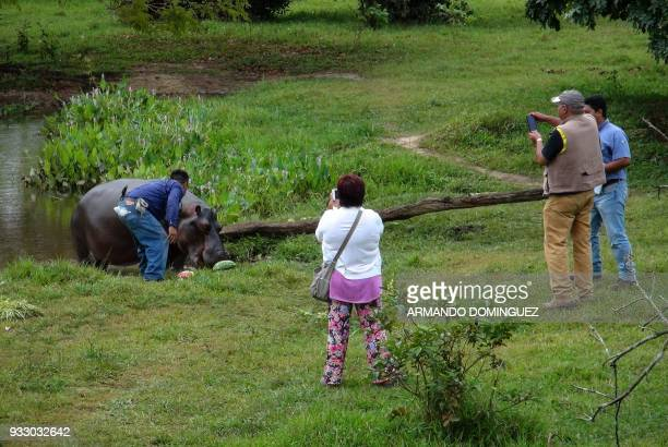 People take pictures of a hippopotamus named Tyson by local residents that was found in a stream at Las Choapas locality in Veracruz state Mexico on...