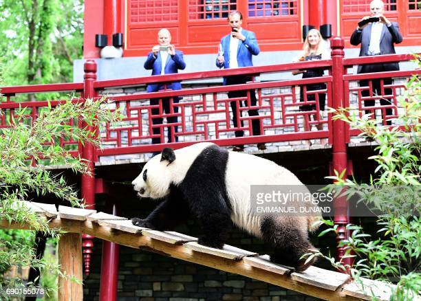 People take pictures of giant female Panda Wu Wen as she discovers her new enclosure during an official unveiling ceremony at Ouwehands Zoo on May 30...
