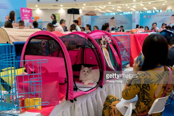 People take their pet cats to a purebred cat awarding competition which is held in a shopping mall More and more Chinese young people have their...