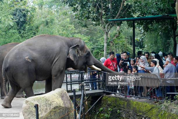 People taking picture in an Elephant during vacation at Jatim 2 Secret Zoo in Batu East of Java Province During Lunar Year holiday many people go to...