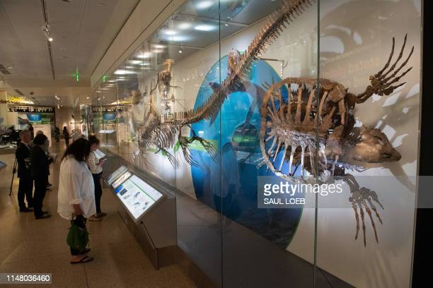 People tour the National Fossil Hall, featuring around 700 fossil specimens that track the history of life on the planet from dinosaurs to mammals,...