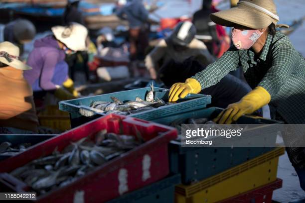 People transport freshlycaught fish at Tan Quang market in Quang Nam province Vietnam on Wednesday June 26 2019 Fishermen are on the front lines of...