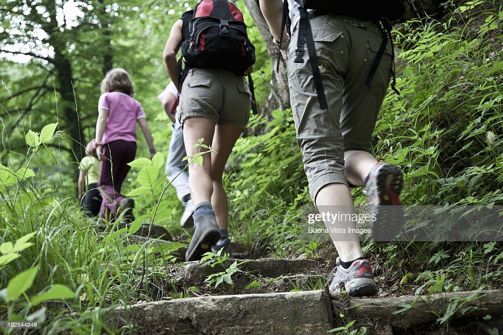 People trekking in a forest : Foto de stock
