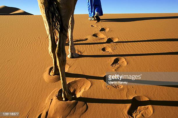 people tuareg man dressed in traditional blue robe with camel in the erg chebbi area. sahara desert. morocco - touareg photos et images de collection