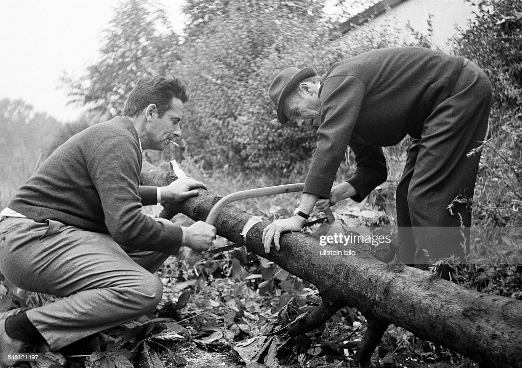 people, two men saw a tree trunk, cutted tree, pulli, waistcoat, trousers, hat, aged 35 to 40 years, aged 50 to 60 years, Theo, Josef - 31.07.1966 : News Photo