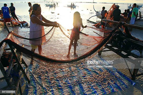 people untangling anchovies from fish net (santa fe, bantayan island, cebu, philippines) - joemill flordelis stock pictures, royalty-free photos & images