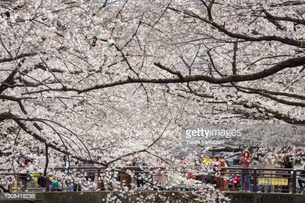 People view cherry blossom trees on March 22, 2021 in Tokyo, Japan. On March 14, Japan Meteorological Corporation declared the arrival of this year's...