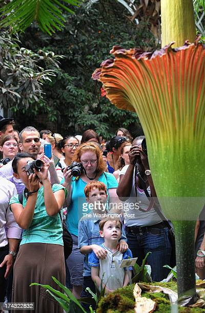 People view the titan arum or corpse flower as it sits on display at the United States Botanic Garden on Monday July 22 2013 in Washington DC