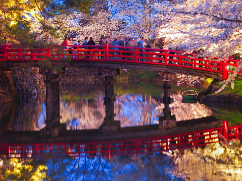 People Viewing Cherry blossoms from the Bridge over the Moat, Hirosaki Park in the Spring Evening, Aomori, Japan - gettyimageskorea