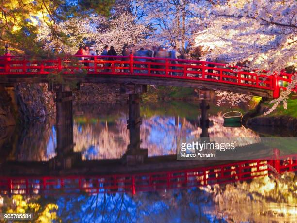 people viewing cherry blossoms from the bridge over the moat, hirosaki park in the spring evening, aomori, japan - präfektur aomori stock-fotos und bilder