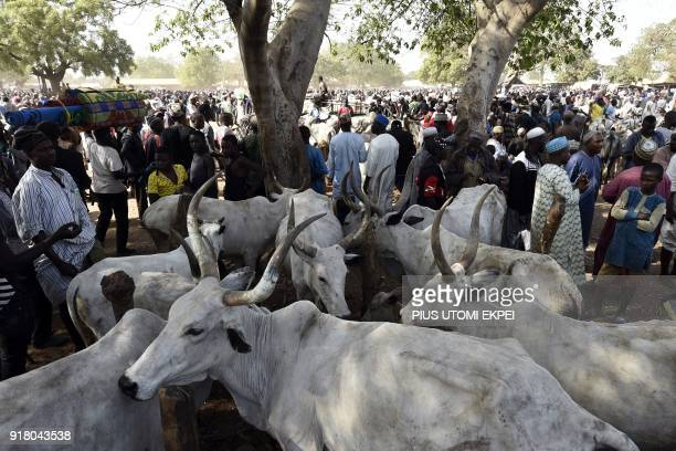 People visit a cattle market in Lafia capital of Nasarawa State northcentral Nigeria on January 4 2018 Nomadic cattle herders have all but left Benue...