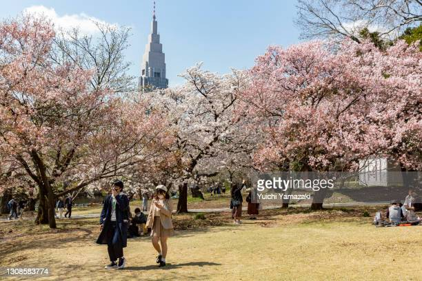 People visit a park during the cherry blossom bloom on March 23, 2021 in Tokyo, Japan. On March 14, the Japan Meteorological Corporation declared the...