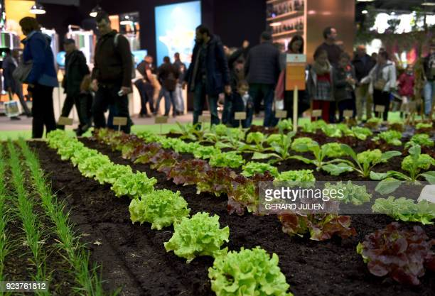 People visit a reconstructed vegetable garden during the opening day of the 55th International Agriculture Fair at the Porte de Versailles exhibition...