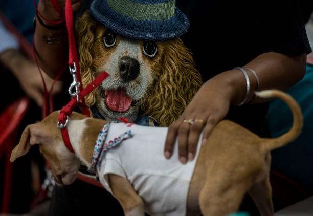 IND: Welove Animal Foundation Pet Adoption Camp
