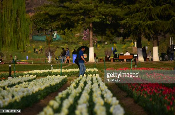People visit Asias largest tulip garden in Srinagar, Indian Administered Kashmir on 03 April 2019. The Asia's largest tulip garden was thrown open...