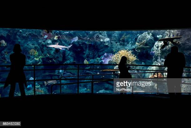 People visit the Aquarium of the Pacific in Long Beach California on November 30 2017 The Aquarium of the Pacific is home to more than 11000 animals...