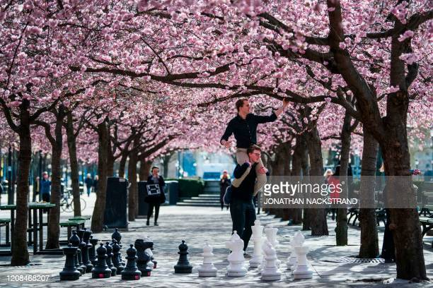 People visit the cherry blossoms trees at Kungstradgarden in Stockholm on March 28 during the the new coronavirus COVID19 pandemic Sweden which has...