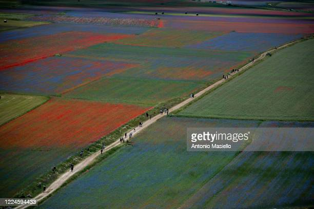 People visit the fields of blooming lentil and poppies flowers during the annual blossom, on July 3, 2020 in Castelluccio di Norcia, Italy....