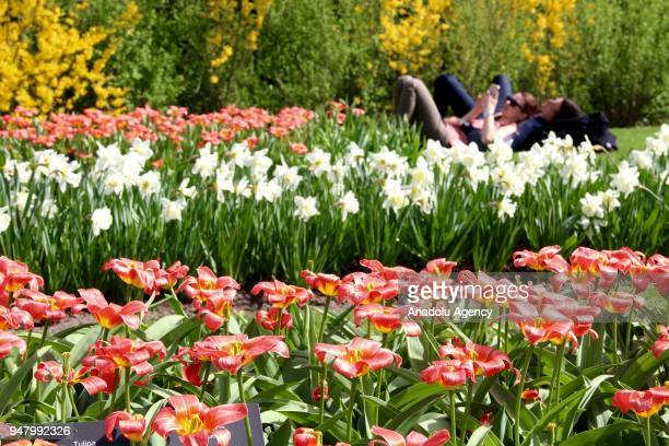 People visit the Keukenhof one of the world's largest flower and tulip garden in Lisse Netherlands on April 17 2018 This year's theme of the floral...