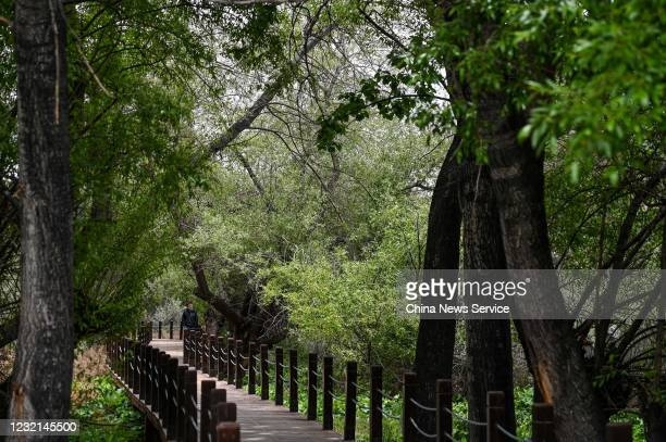 People visit the Lalu wetland on May 28 2020 in Lhasa Tibet Autonomous Region of China Lalu wetland national nature reserve with an altitude of about...